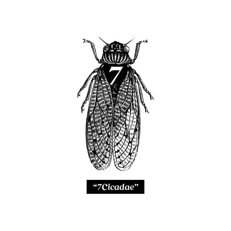Cicadae